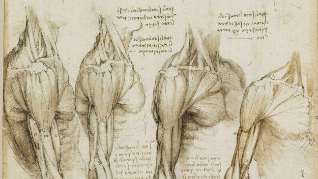 05_anatomist_fullsize