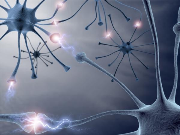 Neurons-Brain