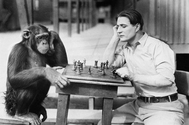 chimpanzee_11