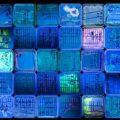 collective_urbanbiome_nyc_uv_n